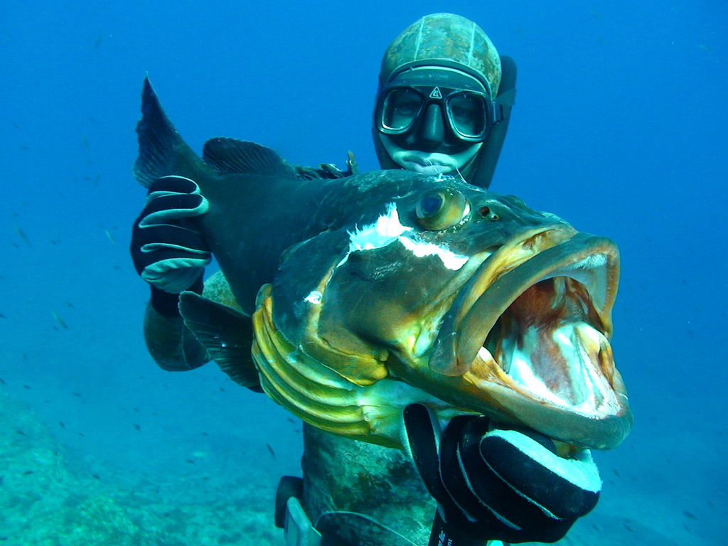 Как правильно нужно прицелится в рыбу при подводной охоте