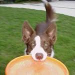Dog Frisbee (Дог фрисби)